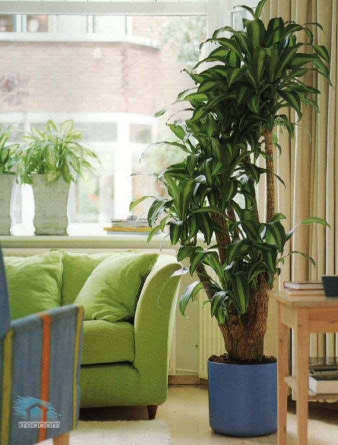 Роль комнатных растений в интерьере ...: kreadom.ru/komnatnye-rasteniya-v-interere-kvartiry.html