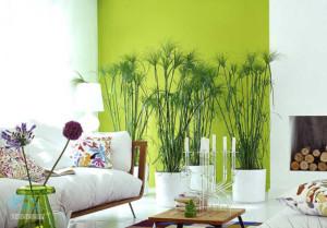 оформление жилища растениями
