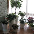 оформление-лоджии-растениями