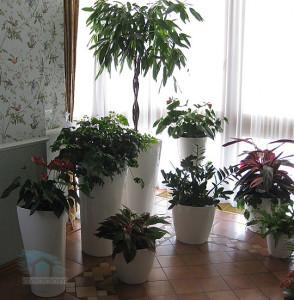 оформление лоджии растениями
