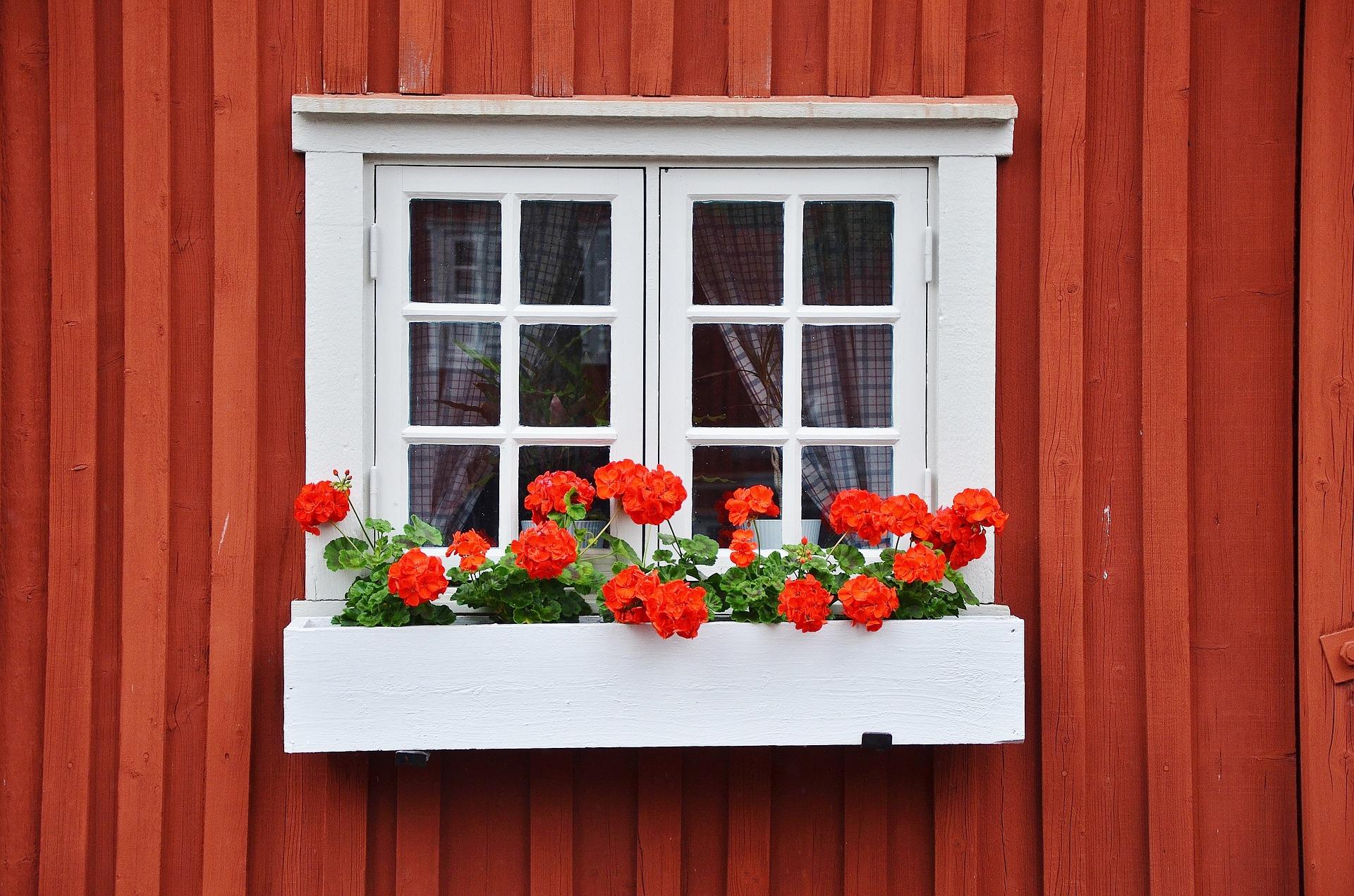 деревянные окна прекрасно сочетаются с цветами